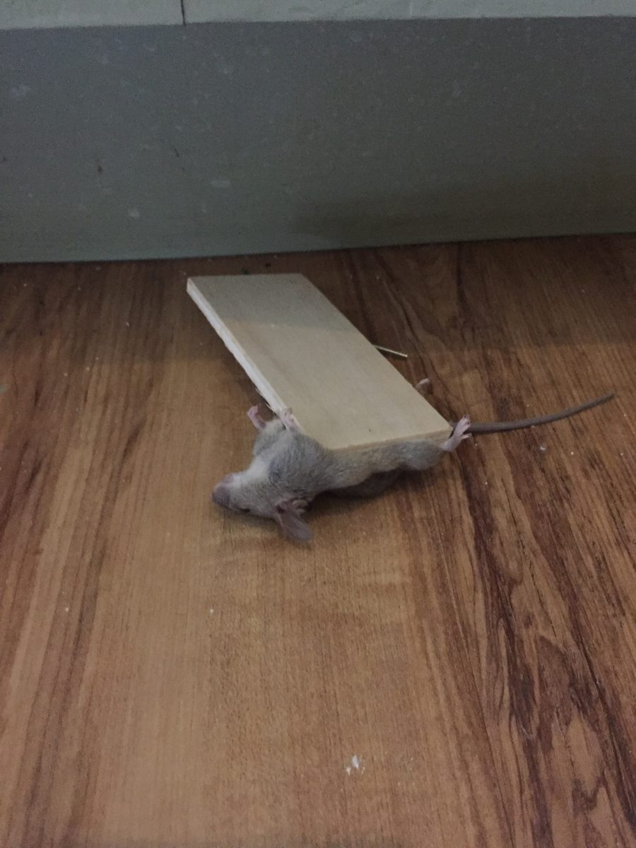 Mouse Traps and Pedicures: 11 Steps To Setting A Good Mouse Trap, Part 2